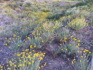 desert walk in las cruces nm